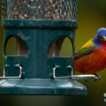Spring 2021's backyard birds – beautiful and surprising feathered visitors